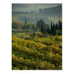 Vineyard, Tuscany, Italy Post Cards