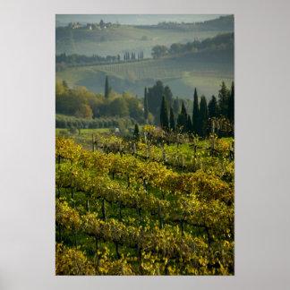 Vineyard, Tuscany, Italy Poster