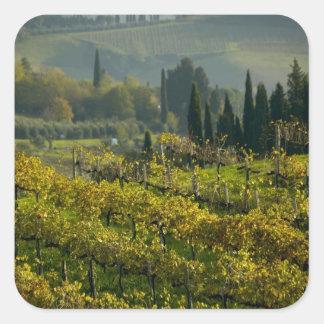 Vineyard, Tuscany, Italy Square Sticker