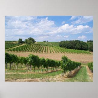 Vineyard - Vignoble Bordeaux - France 04 Posters
