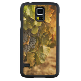 Vineyards At Sunset Carved Maple Galaxy S5 Case