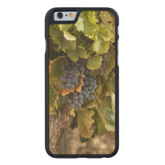 Vineyards At Sunset Carved Maple iPhone 6 Case