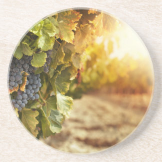 Vineyards At Sunset Coaster