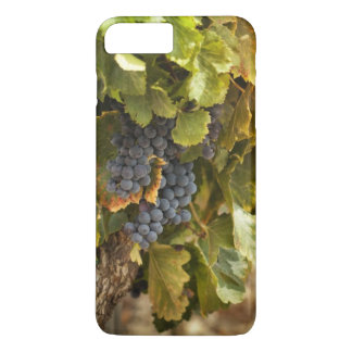 Vineyards At Sunset iPhone 8 Plus/7 Plus Case