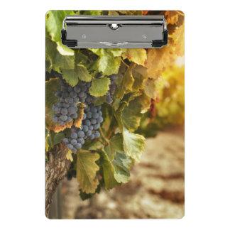 Vineyards At Sunset Mini Clipboard