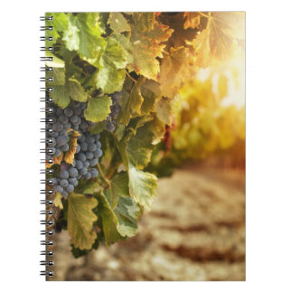 Vineyards At Sunset Notebook