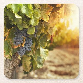 Vineyards At Sunset Square Paper Coaster