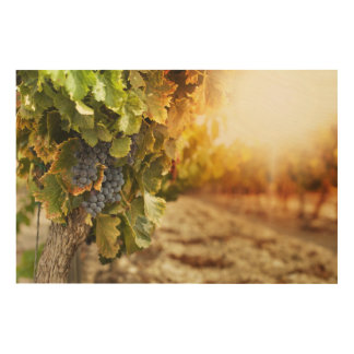 Vineyards At Sunset Wood Canvases