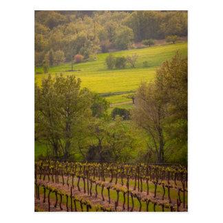 vineyards in France Postcard