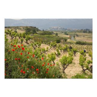 Vineyards near Laguardia, capital of La Rioja Photo Print