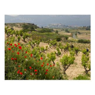 Vineyards near Laguardia, capital of La Rioja Postcard
