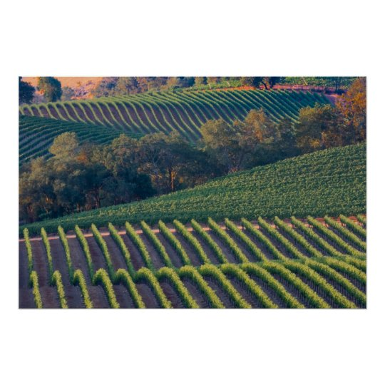 Vineyards of Russian River Valley Poster