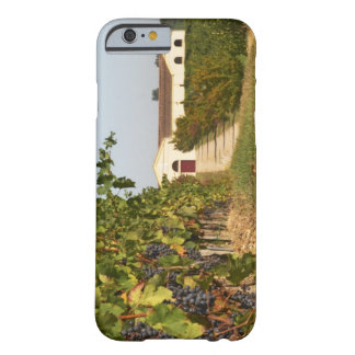 Vineyards, petit verdot vines and the winery in barely there iPhone 6 case