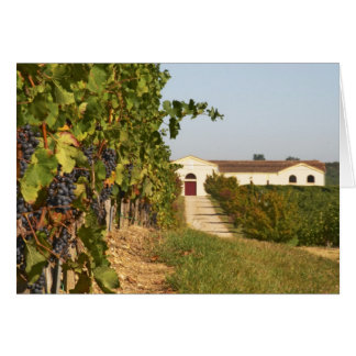 Vineyards, petit verdot vines and the winery in card