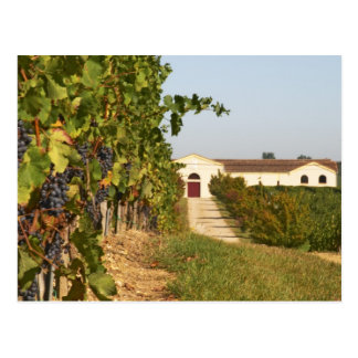 Vineyards, petit verdot vines and the winery in postcard