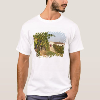 Vineyards, petit verdot vines and the winery in T-Shirt