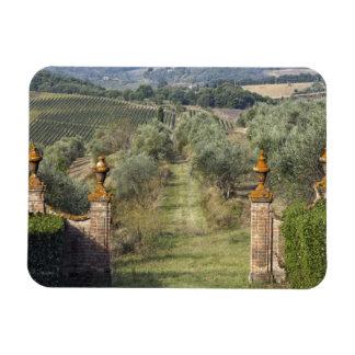 Vineyards, Tuscany, Italy Magnet