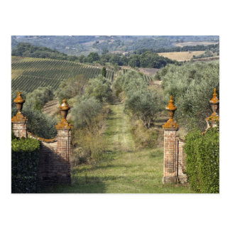 Vineyards, Tuscany, Italy Postcard