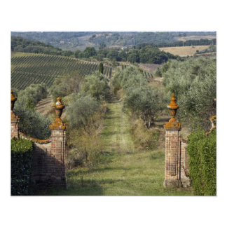 Vineyards Tuscany Italy Posters