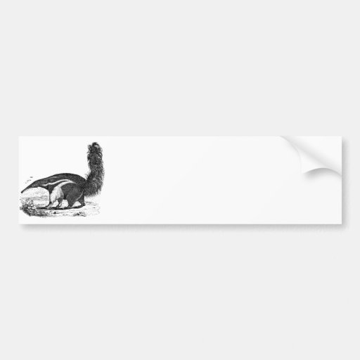 Vintage 1800s Aardvark Retro Ant Eater Template Bumper Sticker