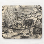 Vintage 1800s African Animal Illustration Animals