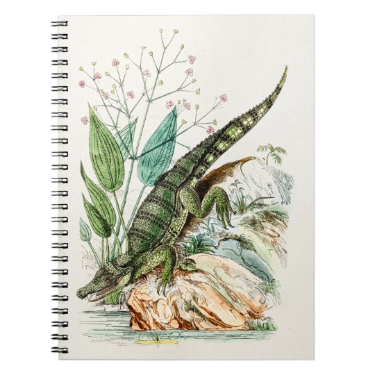 Vintage 1800s Alligator Crocodile Illustration Notebook