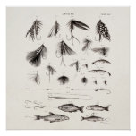 Vintage 1800s Angling Fly Fishing Flies Lures Lure Poster