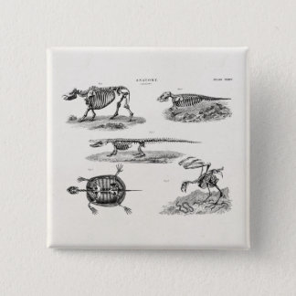Vintage 1800s Animal Skeletons Antique Anatomy 15 Cm Square Badge