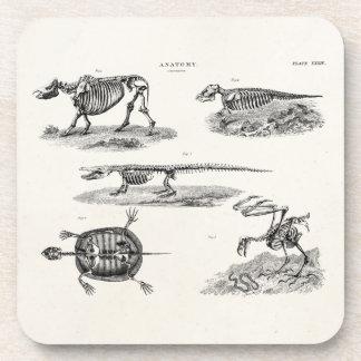 Vintage 1800s Animal Skeletons Antique Anatomy Coasters