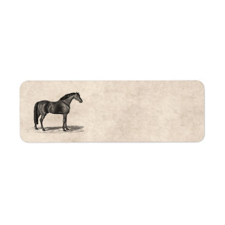 Vintage 1800s Arabian Horse Illustration - Horses Return Address Label