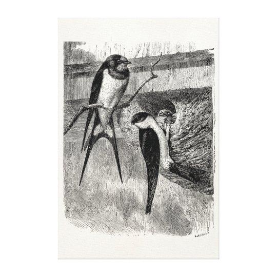 Vintage 1800s Barn Swallow Martin Bird Swallows Canvas