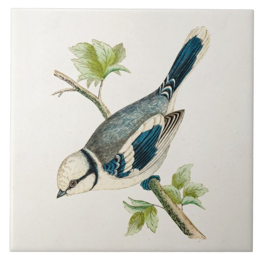 Vintage 1800s Blue Bird Songbird Birds Drawing Large