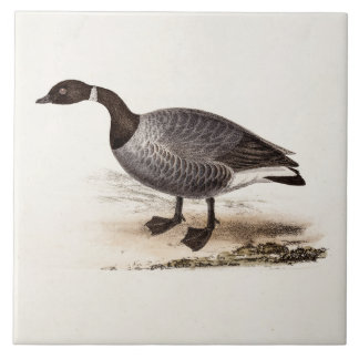 Vintage 1800s Brent Goose - Retro Geese Template Tile
