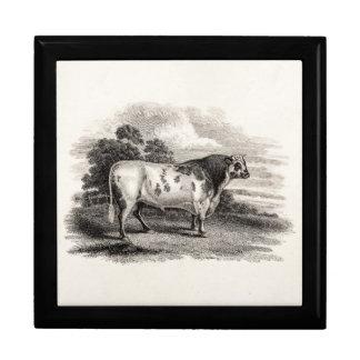 Vintage 1800s Bull Old Agricultural White Bulls Gift Box