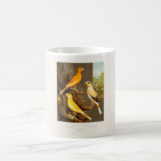 Vintage 1800s Canary Song Bird Template Canaries Basic White Mug