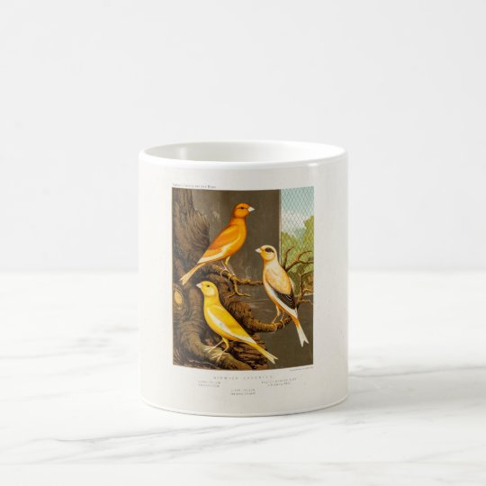 Vintage 1800s Canary Song Bird Template Canaries Coffee