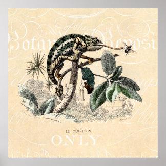 Vintage 1800s Chameleon Lizard Retro Chameleons Poster