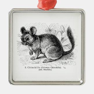 Vintage 1800s Chinchilla Chinchillas Illustration Christmas Ornament