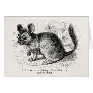 Vintage 1800s Chinchilla Chinchillas Illustration Greeting Card