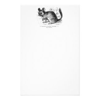 Vintage 1800s Chinchilla Chinchillas Illustration Stationery