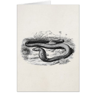 Vintage 1800s Cobra Snake Retro Cobras Drawing Card