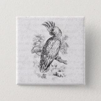 Vintage 1800s Cockatoo Parrot Bird Cockatiel Birds 15 Cm Square Badge