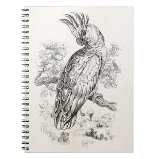 Vintage 1800s Cockatoo Parrot Bird Cockatiel Birds Notebook