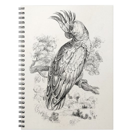 Vintage 1800s Cockatoo Parrot Bird Cockatiel Birds Notebooks