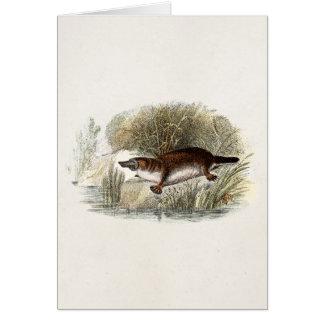 Vintage 1800s Duck Bill Platypus Illustration Greeting Card