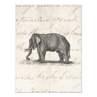 Vintage 1800s Elephant Illustration - Elephants Photo Print