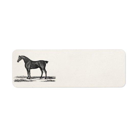 Vintage 1800s English Hunter Horse Hunting Horses