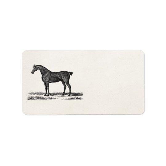 Vintage 1800s English Hunter Horse Hunting Horses Label