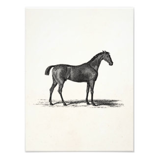 Vintage 1800s English Race Horse - Racing Horses Photo Art