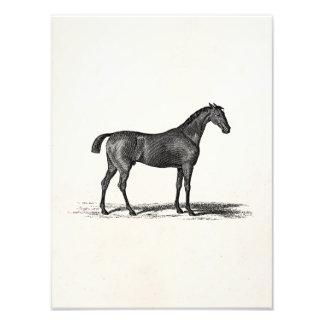 Vintage 1800s English Race Horse - Racing Horses Photo Art